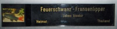 Doppelname: z.B. Angelika Feuerschwanz-Fransenlipper